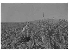 man, standing, experimental, field, old, photo