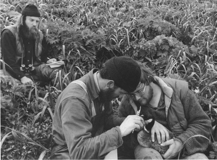 men, field work, bird, branta canadensis