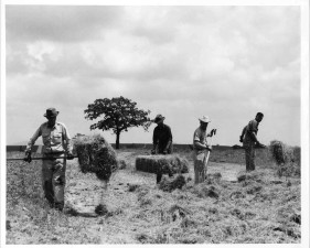 men, work, together, farm, field, haying, operation