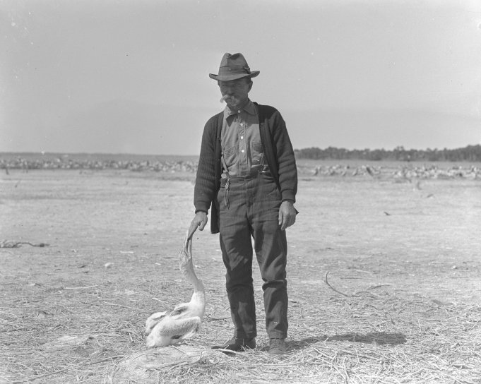Free picture: old, photo, man, dressed, cowboy, bird