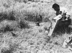 releasing, endangered, masked, bobwhite, quail, birds