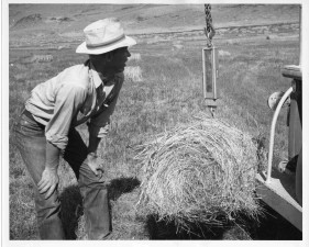 sample, weighing, hay, bales, vintage, photo