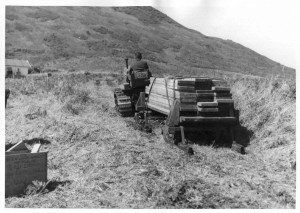 tractor, hauling, weir, lumber, old, vintage, history, photo