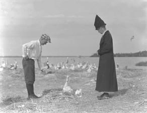 dos, hombres, alimentación, pelícano, aves