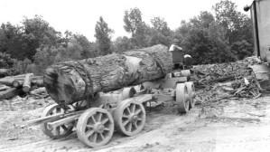 duże, drzewo, tułowia, transportowane, vintage, starzenie się, magazynie, Fotografia