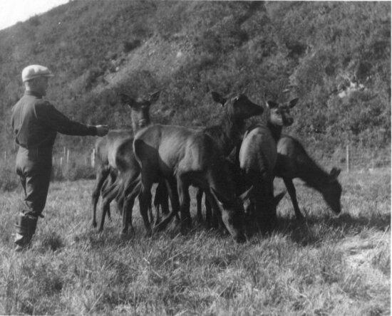 vintage, photo, men, elks