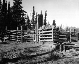 vintage, foto, Männer, Wald