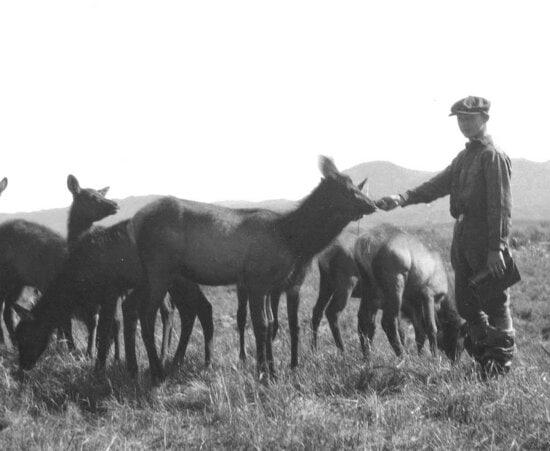 young boy, feeding, elks, vintage, photo
