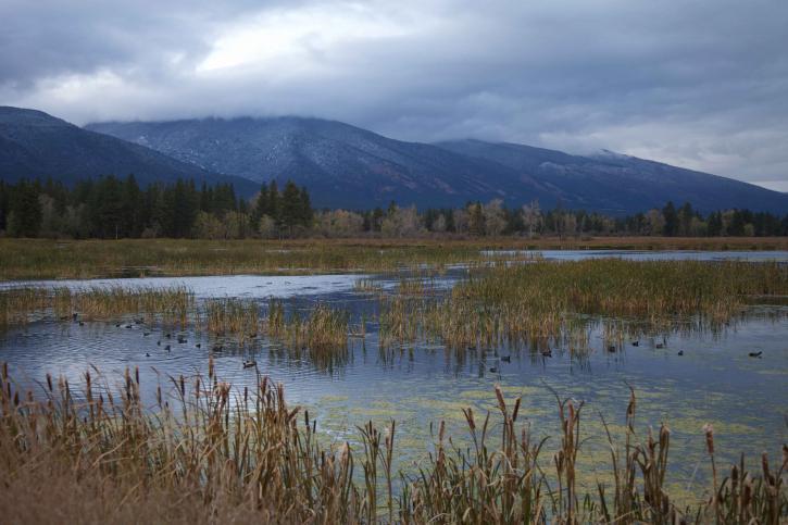 naturskjønne, landskap, vannfugler