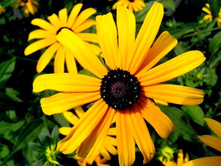 Vivir la vida en Saint-Aignan: Flores amarillas brillantes