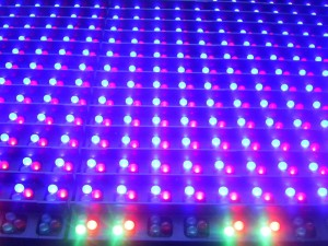 closeup, light, emitting, diodes, sign