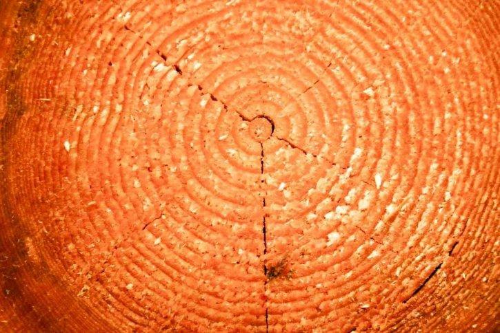 cut, wood, log, up-close, texture