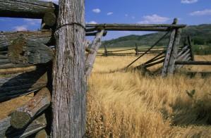 fence, posts