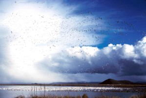 flock, waterfowl, birds, lake, air