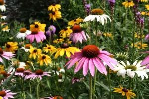 flowering, cone, flowers