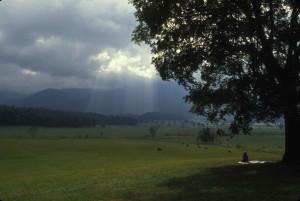 parque nacional, mujer, sentado, árbol, primer plano