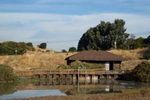 maison, lac, l'eau, agréable, clôture, côte