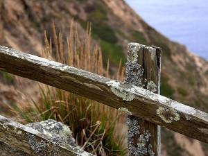mousses, lichens, vieux, barrière, océan
