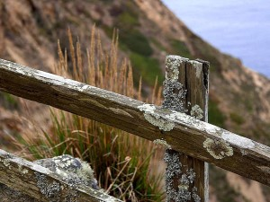moss, lichen, old, fence, ocean