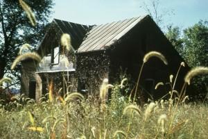vieux, bois, maison, prairie, entouré, wildness, fleurs