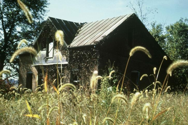 old, wooden, house, meadow, surrounded, wildness, flowers