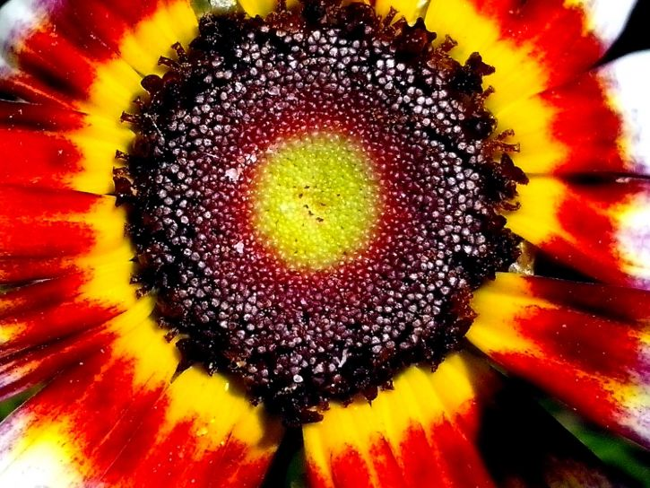 frø, blomst, nær