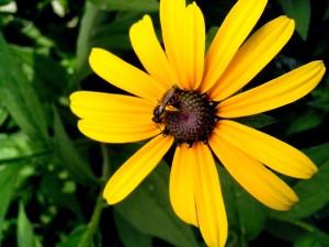 single, big, yellow flower