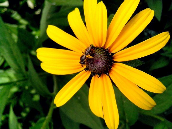único, grande, flor amarilla