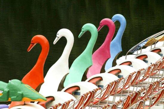swan, chairs