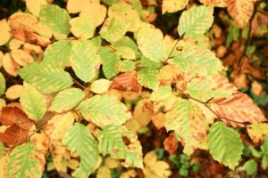 divers, feuilles, fond