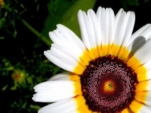 kwiat biały, tło